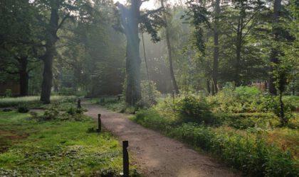 psychedelische retraite natuur